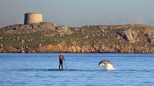 Kayaking and Dolphin Watching off Dalkey Island